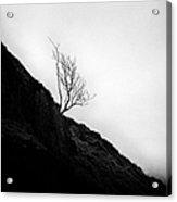 Tree In Mist Acrylic Print by John Farnan