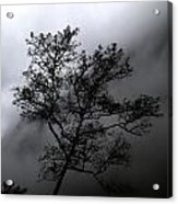 Tree In Mist Acrylic Print