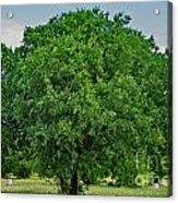 Tree In Nature Acrylic Print