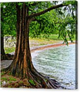 Tree In Paradise Acrylic Print