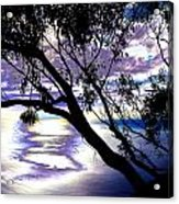 Tree In Silhouette Acrylic Print