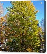 Tree In The Cemetery Acrylic Print