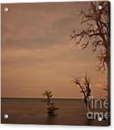 Tree In The Shoreside Acrylic Print