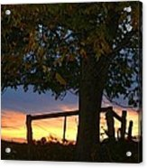 Tree In The Sunset Acrylic Print