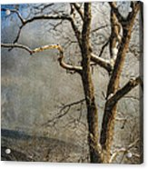 Tree In Winter Acrylic Print by Lois Bryan