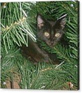Tree Kitten Acrylic Print