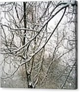 Tree Lace Acrylic Print by Desline Vitto