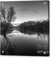 Tree Lake Acrylic Print