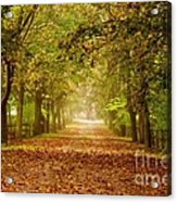 Tree Lane Acrylic Print