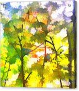 Tree Leaves Acrylic Print