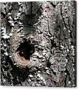 Tree Lichen Hole Acrylic Print