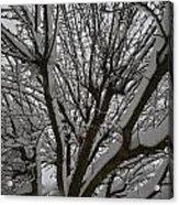 Tree Limb 4 Acrylic Print