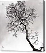 Tree Limb Acrylic Print