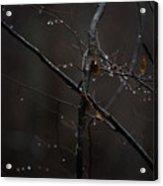 Tree Limb With Rain Drops 2 Acrylic Print