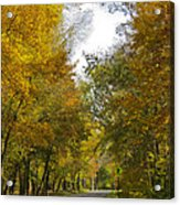 Tree Lined Park On A Fall Day Acrylic Print