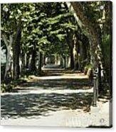 Tree Lined Promenade Acrylic Print