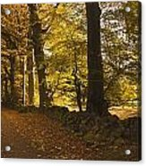 Tree Lined Road Covered With Fallen Acrylic Print by John Short