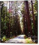 Tree Lined Road Acrylic Print by Crystal Joy Photography