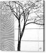 Tree Lines Acrylic Print by Darryl Dalton