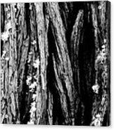 Tree Lines Acrylic Print