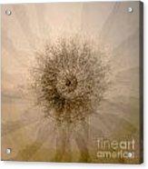 Tree Mandala 1 Acrylic Print