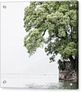 Tree Next To A Lake Acrylic Print