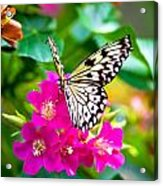 Tree Nymph Butterfly Acrylic Print