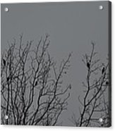 Tree Of Birds Acrylic Print