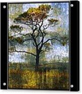 Tree Of Colours Acrylic Print