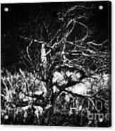Tree Of Darkness Acrylic Print