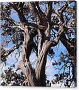 Tree Of Hope Acrylic Print