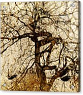 Tree Of Life  Acrylic Print by Ann Powell