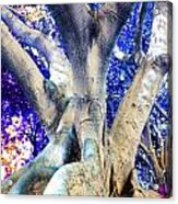 Tree Of Life Photography On Canvas Poster Beautiful Unique Fine Art Prints For Your Home Decoration Acrylic Print