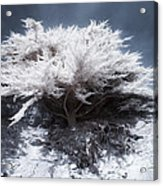 Tree Of Light Acrylic Print