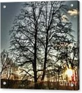 Tree Of Light Acrylic Print