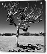 Tree Of Lost Soles 2 Acrylic Print