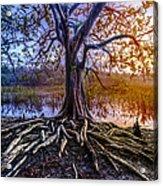 Tree Of Souls Acrylic Print