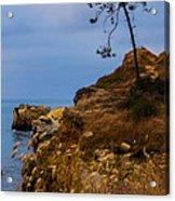 Tree On A Cliff II Acrylic Print