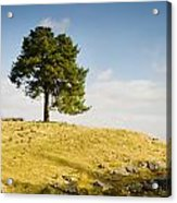 Tree On A Hill Acrylic Print