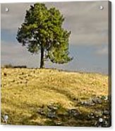 Tree On A Hill Vertical Acrylic Print