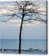 Tree On Beach Acrylic Print