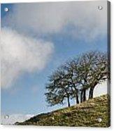 Tree On Hillside Acrylic Print