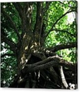 Tree On Pierce Stocking Scenic Drive Acrylic Print by Michelle Calkins