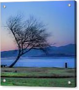 Tree On The Banks Of The River Clyde Acrylic Print