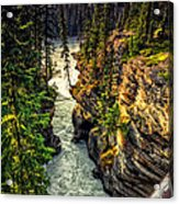Tree On The Edge Of A Cliff Acrylic Print