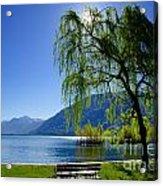 Tree On The Lakefront Acrylic Print