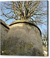 Tree On The Wall Acrylic Print
