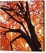Tree Orange Blast Acrylic Print