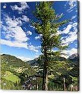 tree over Cordevole valley Acrylic Print