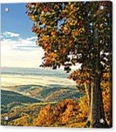 Tree Overlook Vista Landscape Acrylic Print